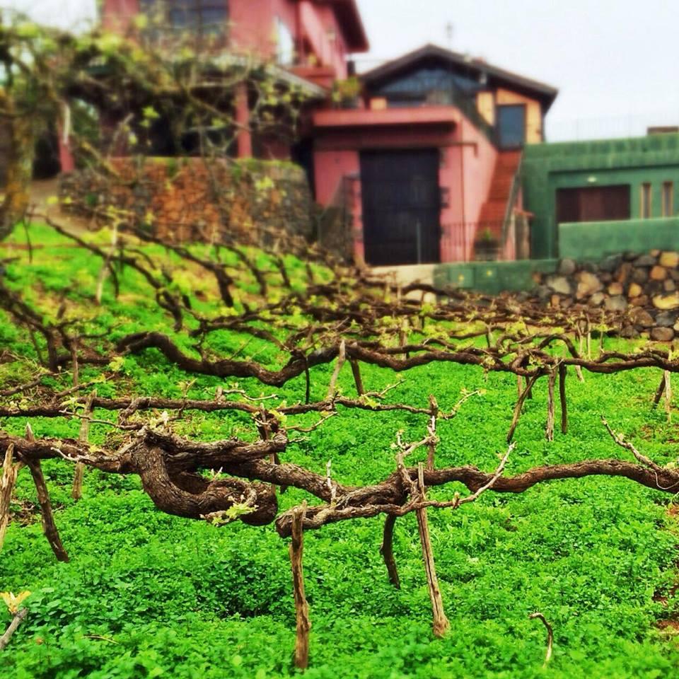 monje viñas